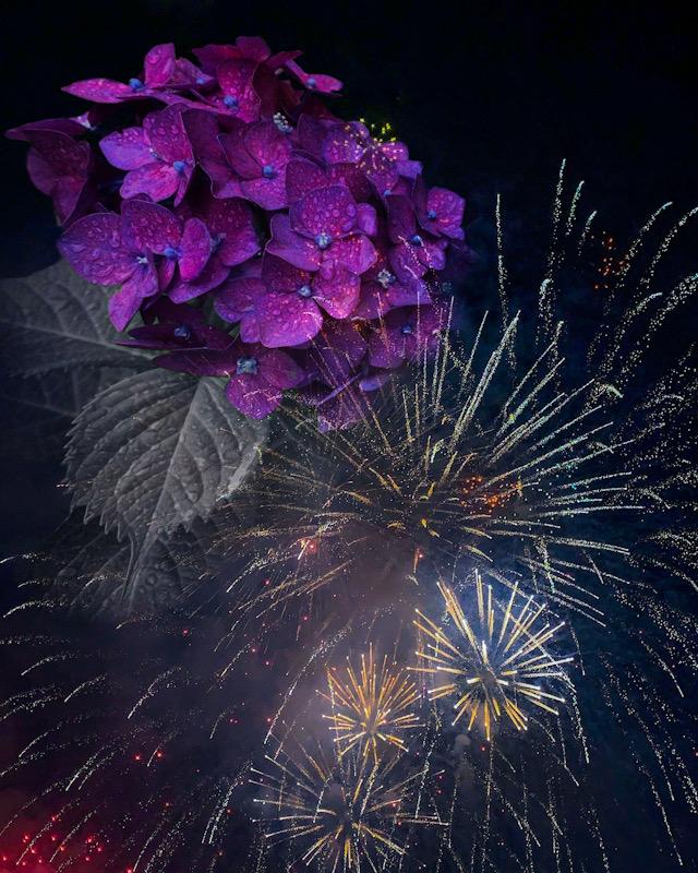 collage_flower.JPEG