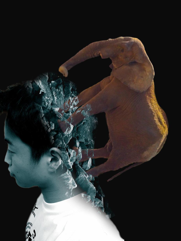 montage_elephant.JPEG