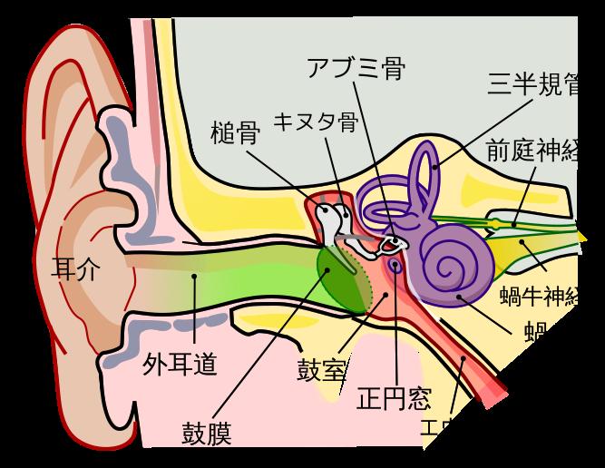 Human_Ear.png