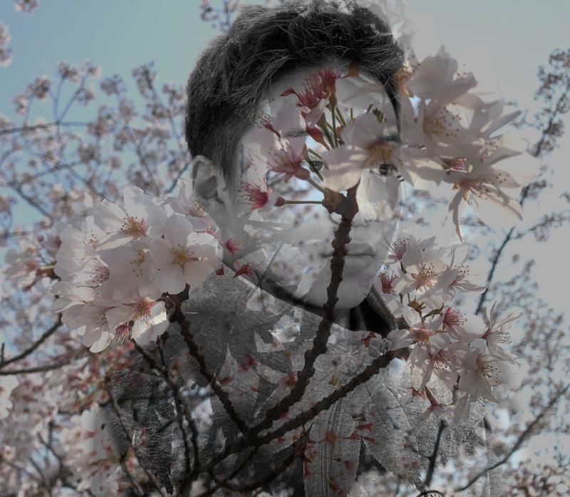 montage_sakura.leaves.jpeg