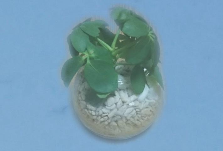 母の日に贈った植物3.jpg