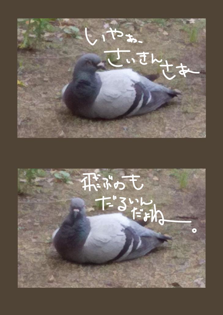 hato01.jpg